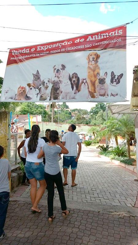 embu das artes feira dos animais