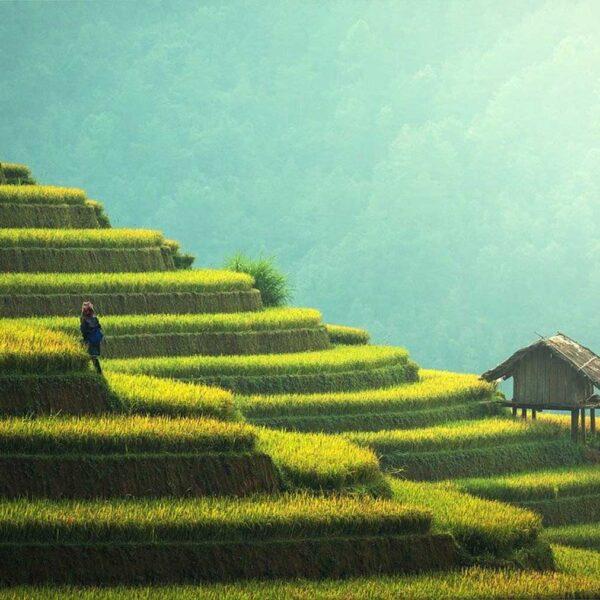 lua de mel na tailandia