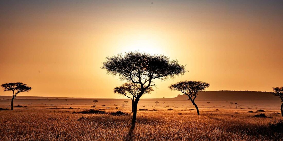 Safari na lua de mel
